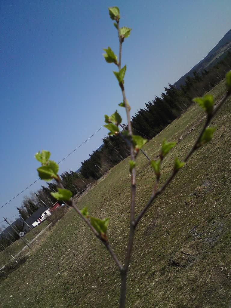 Naturbilder DSC02033