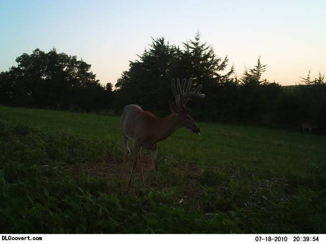 Awesome new trail camera Mr68013199