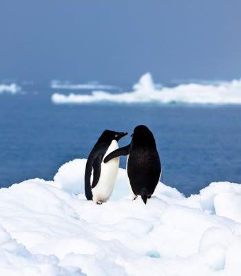 Foto nga bota e kafsheve dhe zogjve  - Faqe 2 B49786D37282B3C4758A70F6F7201