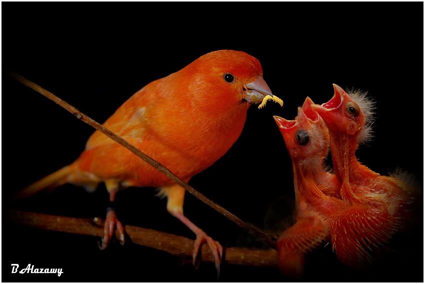 Foto nga bota e kafsheve dhe zogjve  - Faqe 2 1230742246hzTAuNm1