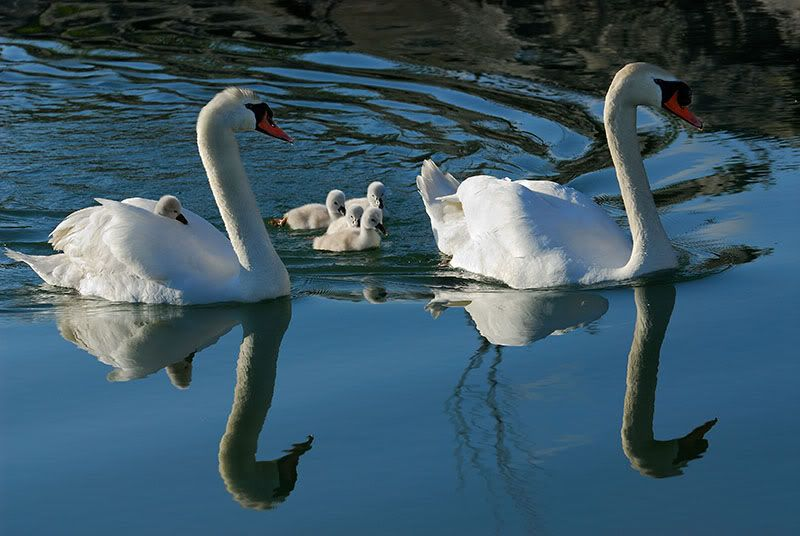 Foto nga bota e kafsheve dhe zogjve  - Faqe 2 1243944624V6XTfi91