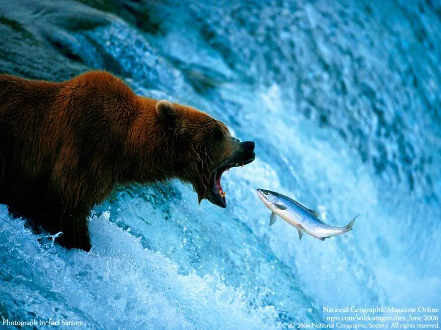 Foto nga bota e kafsheve dhe zogjve  - Faqe 2 1249285501SwTvyFZ1
