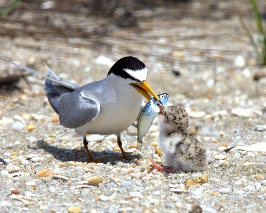 Foto nga bota e kafsheve dhe zogjve  - Faqe 2 1268980318tH7cEcr1