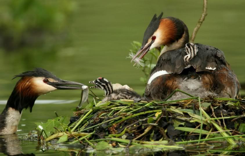 Foto nga bota e kafsheve dhe zogjve  - Faqe 2 1269423846utdakCp1