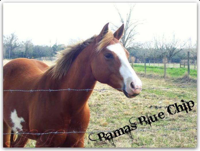 Bamas Blue Chip - $2,000 25380_109980665683968_1000001610619