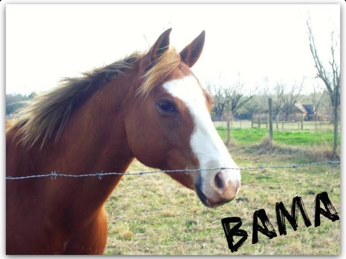 Bamas Blue Chip - $2,000 25380_109980672350634_1000001610619