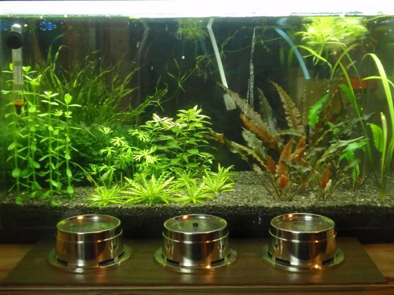 Planted Ledge OtoVitattusHome_062311