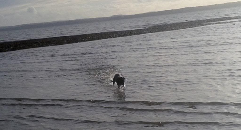 Elsie having fun at the beach today 20140114_142203
