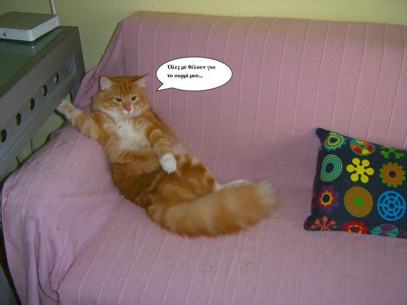 """Οι """"μαύρες"""" σκέψεις μιας γάτας... Μήπως η γάτα έχει κάτι να μας πει; - Σελίδα 18 SA500006-1"""