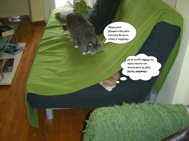 """Οι """"μαύρες"""" σκέψεις μιας γάτας... Μήπως η γάτα έχει κάτι να μας πει; - Σελίδα 18 SA5000142"""