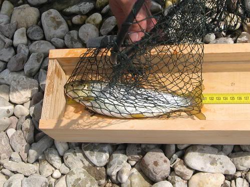 Bonton ribolovca Mjerenje_flyfishing