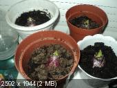 Фотоконкурс «Весна на ладошке». 449274dab70e93d43304232246bace9f