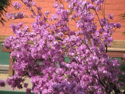 Фотоконкурс «Весна на ладошке». 1916a7e7abecece04a025e97d3010f40