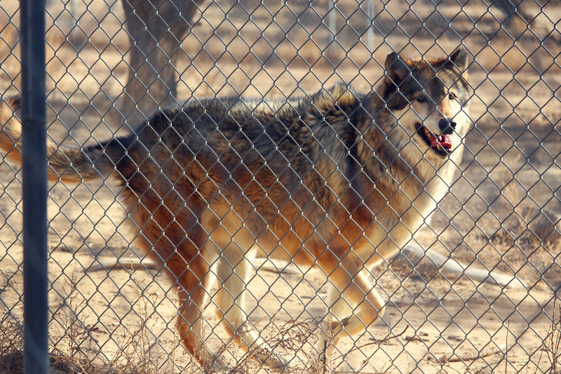 Wolf Sanctuary visit IMG_0001_zpskoulxmgn