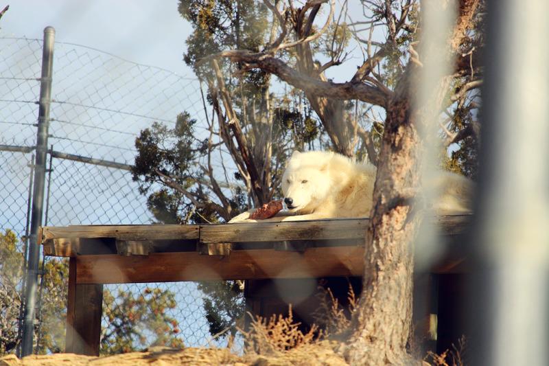 Wolf Sanctuary visit IMG_0025_zpsuywe5hbt
