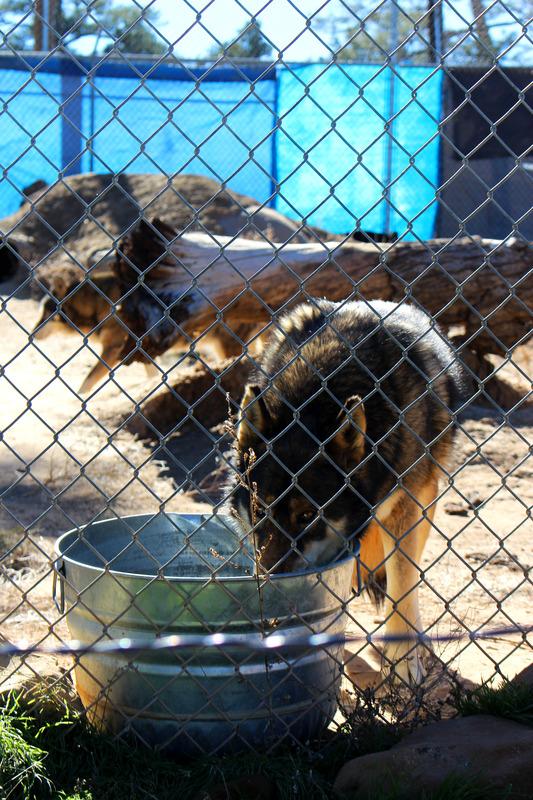 Wolf Sanctuary visit IMG_9961_zpssp8fasoz