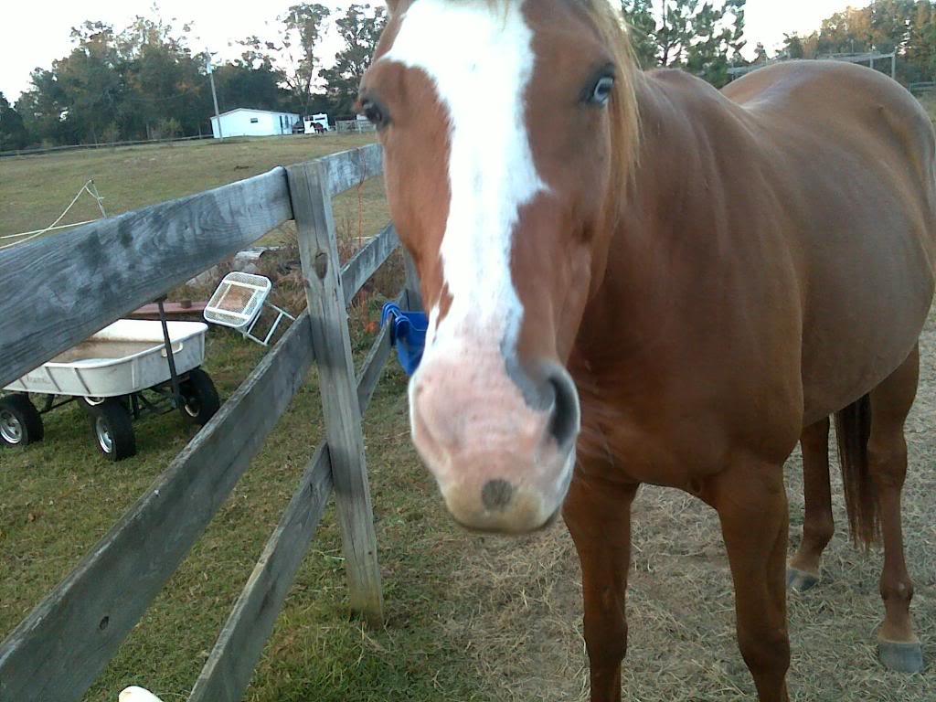 Selling one of my mares-New pics added! 060-1