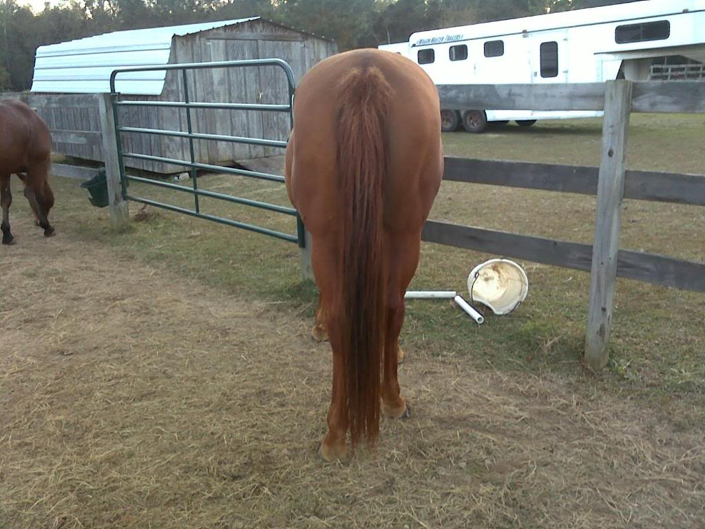 Selling one of my mares-New pics added! 065-1