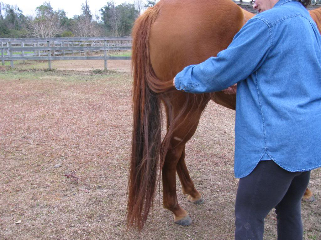 Selling one of my mares-New pics added! Nancyscamera145