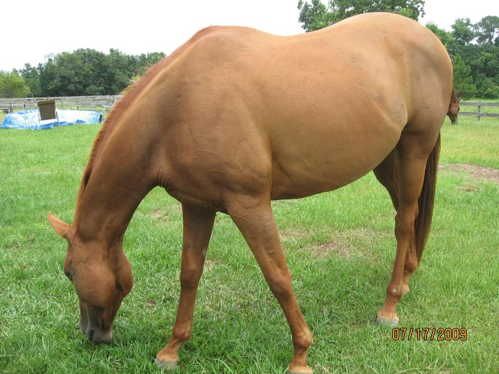 Selling one of my mares-New pics added! Rednecklawnmowers073