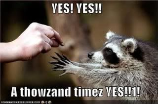 Clean Jokes - Page 2 Funny-pictures-racoon-yes