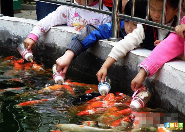 Koi feeding in China ATT00024