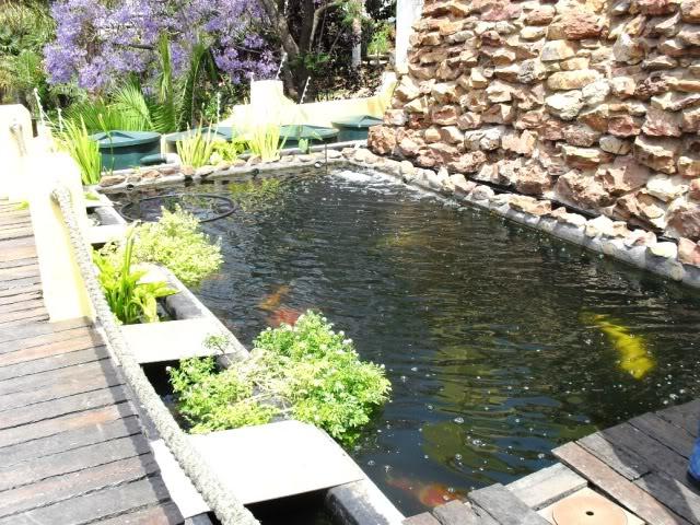 Gauteng Chapter Koi Safari - October SDC10410