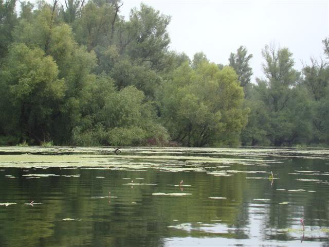 9 dana na Dravi , veslanje - NAVIGATOR DSC00239Small