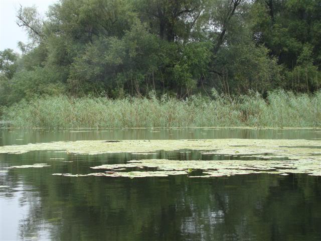 9 dana na Dravi , veslanje - NAVIGATOR DSC00240Small