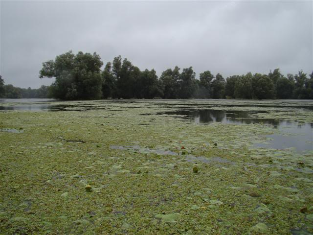 9 dana na Dravi , veslanje - NAVIGATOR DSC00245Small