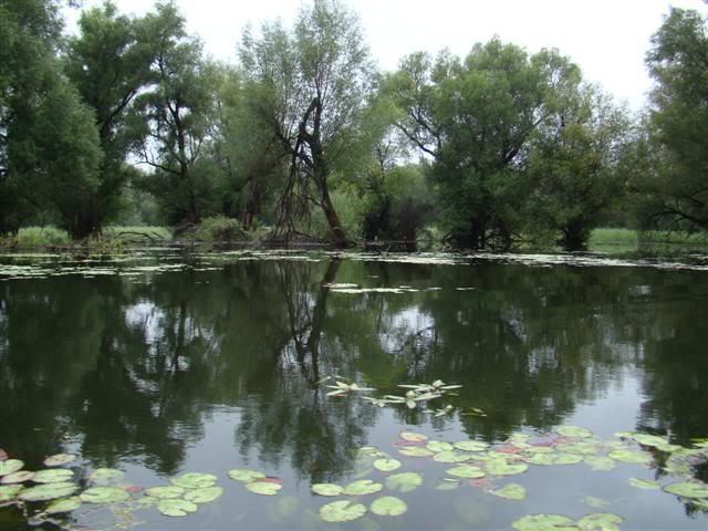 9 dana na Dravi , veslanje - NAVIGATOR DSC00252Small