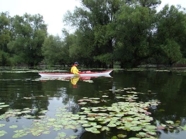 9 dana na Dravi , veslanje - NAVIGATOR DSC00256Small