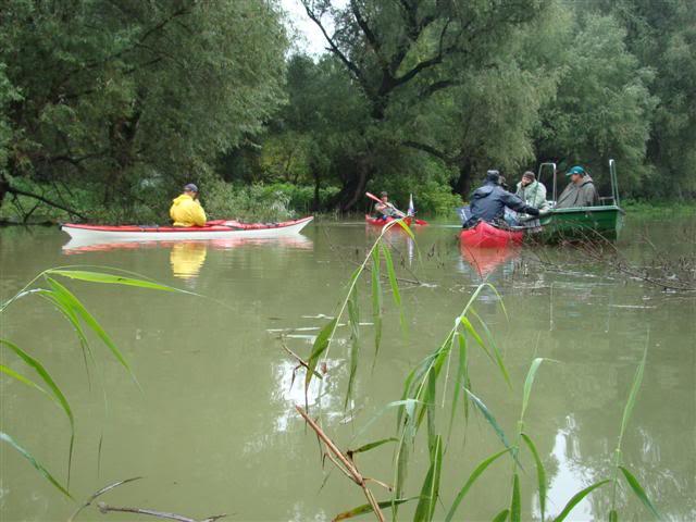 9 dana na Dravi , veslanje - NAVIGATOR DSC00273Small