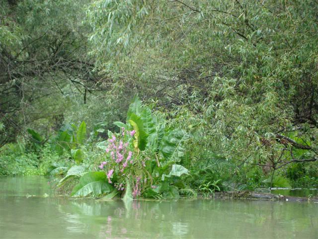 9 dana na Dravi , veslanje - NAVIGATOR DSC00287Small