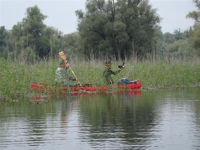 9 dana na Dravi , veslanje - NAVIGATOR DSC00308Small