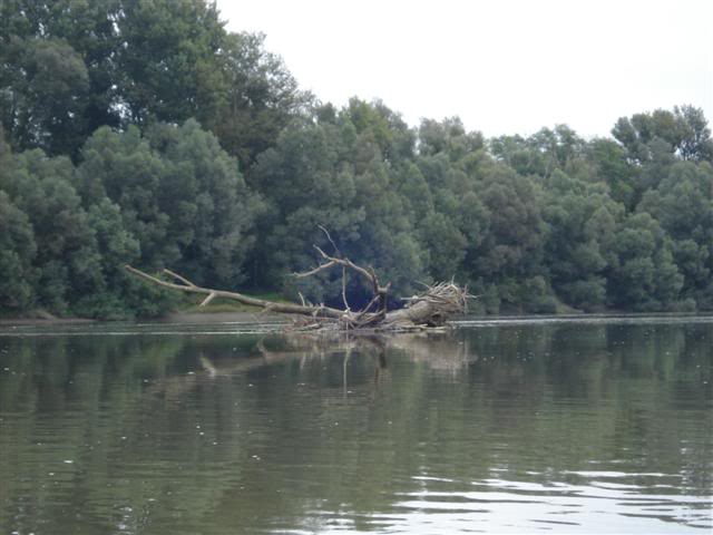 9 dana na Dravi , veslanje - NAVIGATOR DSC01859Small