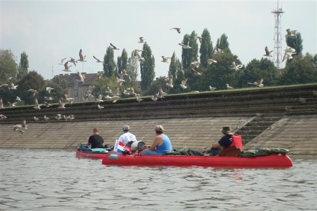 9 dana na Dravi , veslanje - NAVIGATOR DSC08107Small