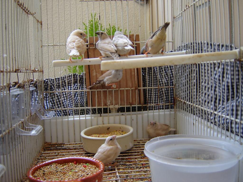 Novas crias com progenitores 022