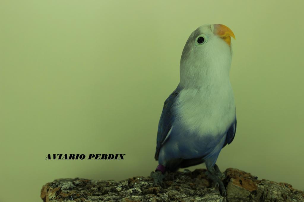Azul Violeta SF IMG_1810_zpsd5d823b7