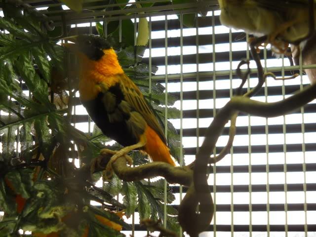 My Orange Weavers E27ecab8