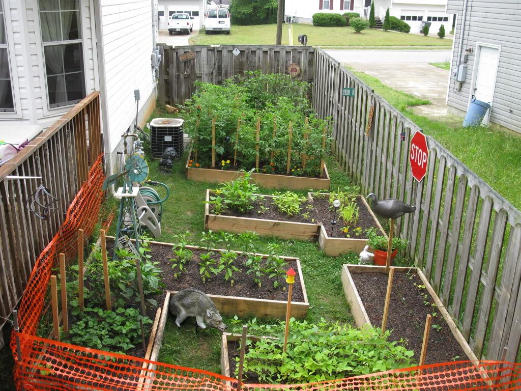 maze garden updates IMG_6291