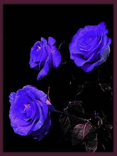 VIOLET - Page 2 Blue-Love--colors--blue--romance_large