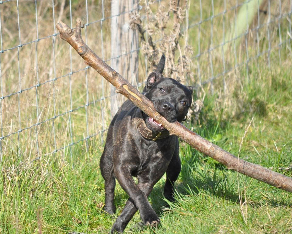 And normal service resumes from the stick monster DSC_0016-1