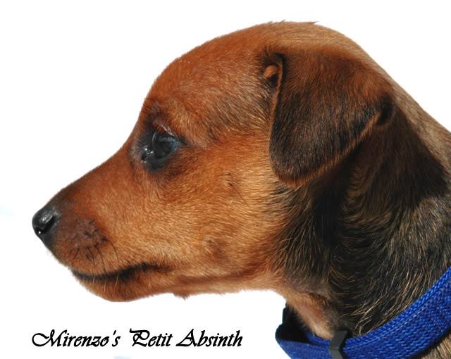 Kennel Mirenzos dagbok - Oppdateringer s 41 - Page 24 Absinth4-1