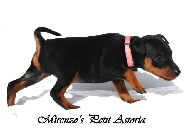 Kennel Mirenzos dagbok - Oppdateringer s 41 - Page 24 Astoria-4