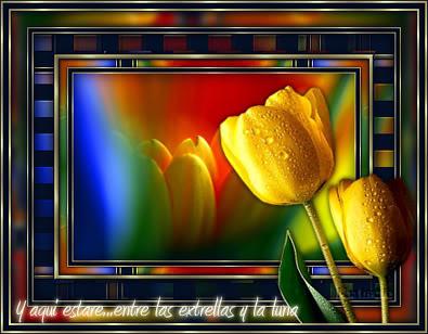 Sueña Tulip01gu3