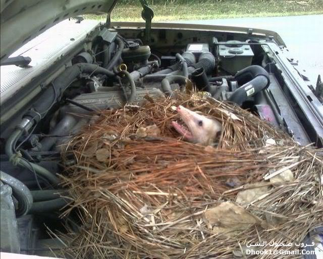 ما هذا الذى يسكن فى سيارتك 11