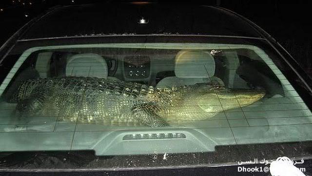 ما هذا الذى يسكن فى سيارتك 18