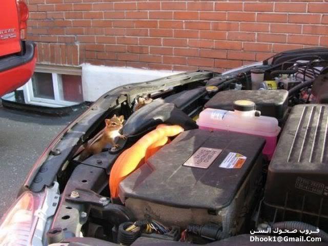 ما هذا الذى يسكن فى سيارتك 3
