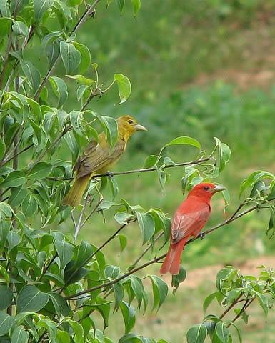 கவலை மறக்கும் காட்சிகள் அழகிய பறவைகள் சில.. - Page 5 Birdies